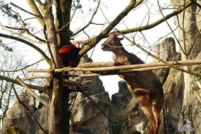Tierpark Hagenbeck 14.02.2015    137