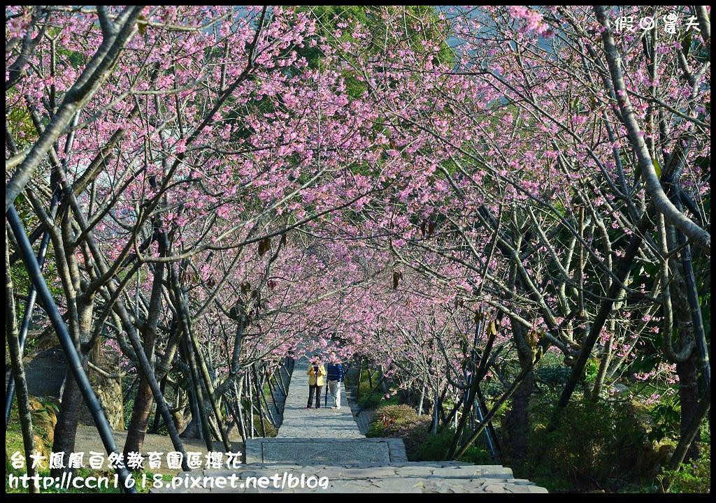 台大鳳凰自然教育園區櫻花DSC_5982