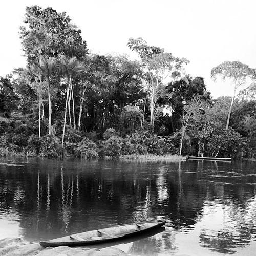#ac #acre #amazonia #brasil #brasilnature #belezasdoacre #brasil_nature #cruzeirodosul #instacruzeirodosul #igersdizquefuiorai #igersbrasil #instaacre #igersacre #instaczs #igers #nature #nossoacre #naturephotography #omelhordaqui #photo