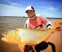 Douradão  do Rio Paraná  fisgado em Goya-AR pelo staff da revista pesca e cia Alexandre Dick.  #pescaamadora #pesqueesolte #baitcast #fly #pescaesportiva #sportfishing #fishing #angler #monsterfish #anglerapproved #dourado #bassfishing #bass #angler #snoo