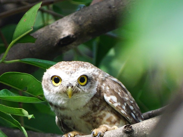 I'm watching you !!