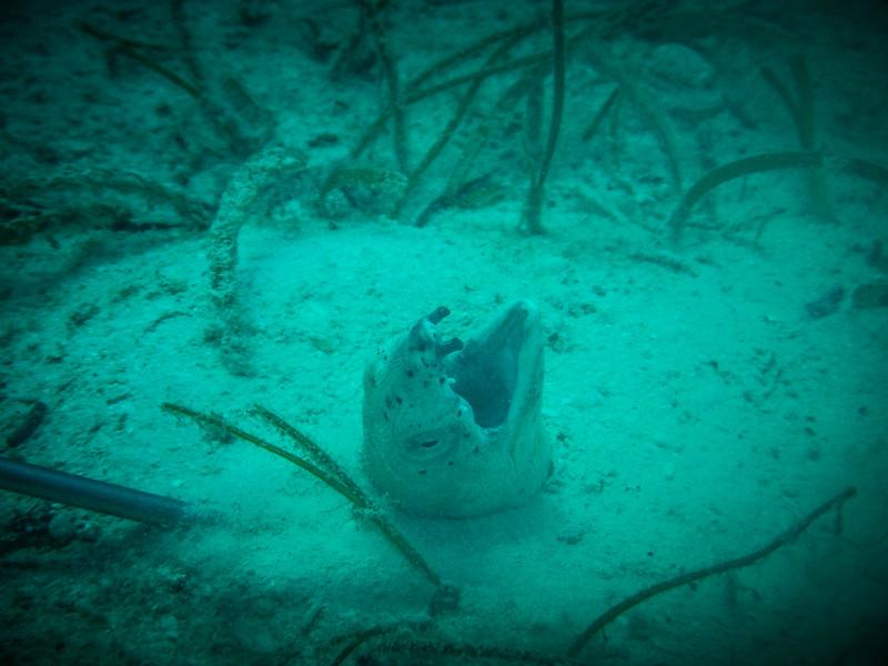 sipadan diving review