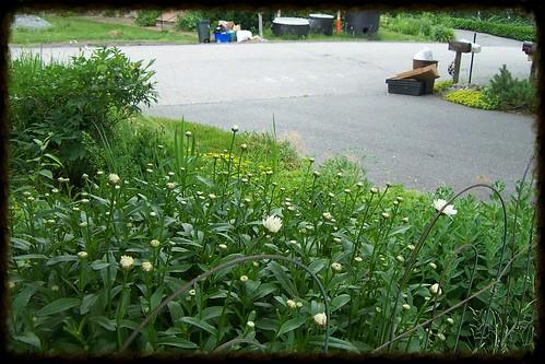 Garden 26 June 20130018