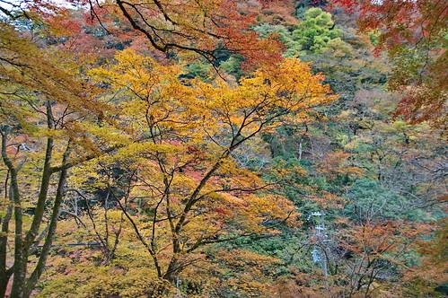【写真】2012 紅葉 : 貴船神社/2019-02-06/IMGP5934