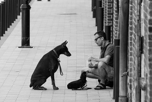 Obedient dogs on Market Street - #181/365 by PJMixer