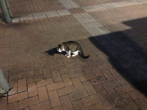 三木SA(上り)にいた猫