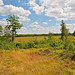Small photo of Spaulding Fen State Natural Area