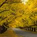 Autumn Street by GreyStump