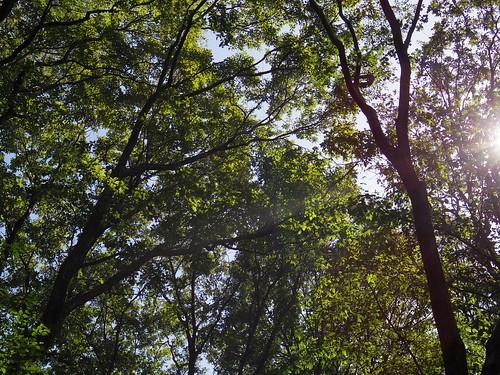 @森林植物園