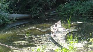 Der gigantische Drache im Saurierpark Kleinwelka hielt sich mit kräftigen Flügelschlägen in der Luft 0164