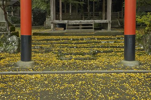 【写真】2013 紅葉 : 岩戸落葉神社(2)/2020-07-30/IMGP3157