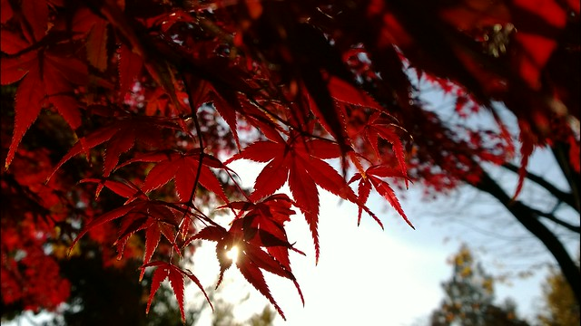 Autumn leaves with morning sun light