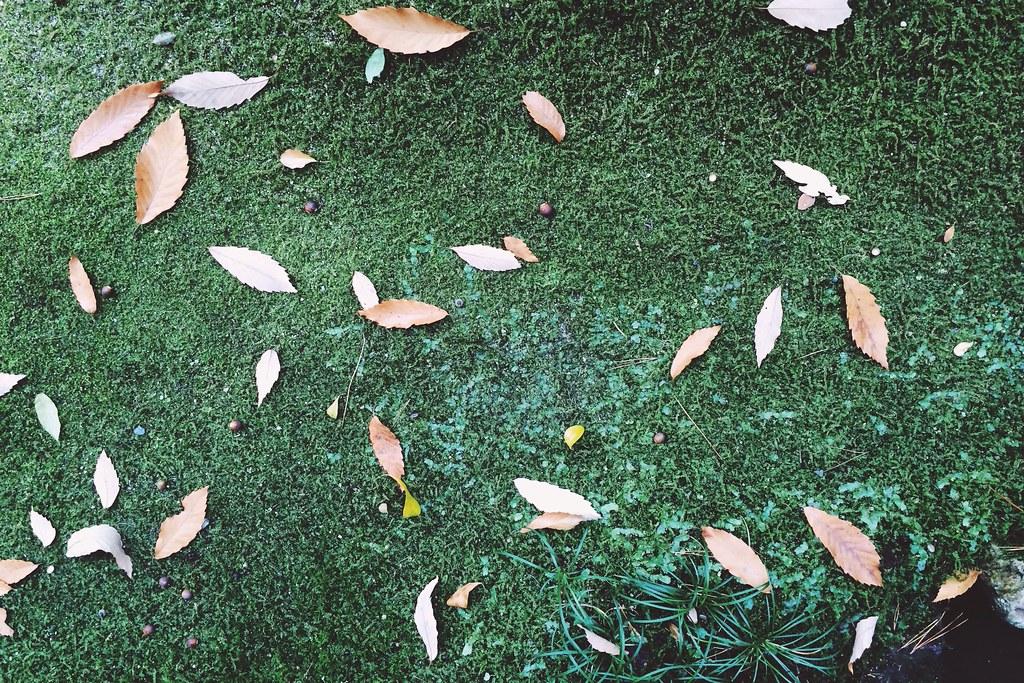 2013/12/27 20131227_leaves