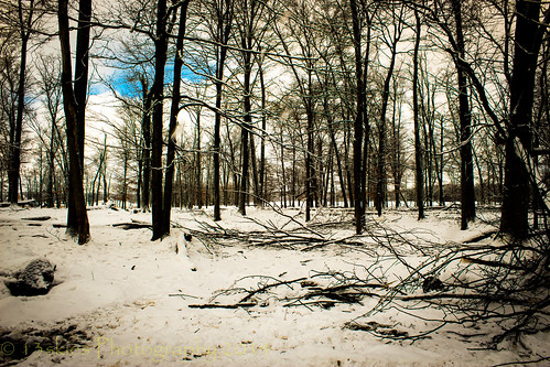 blue trees winter snow canada cold ice nature wet woods quiet snowstorm dumfriesrd nearbanisterlake