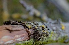arbre per Jordi Hernandez a Flickr