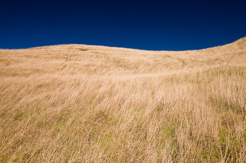 blue sky grass sunny auckland slope mountwellington