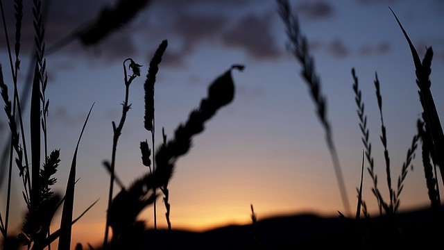 backlight oat #2