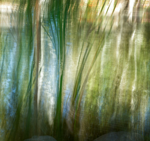 california plants abstract reeds garden pond unitedstates descanso lacañadaflintridge