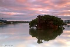 Sunrise: SS Ayrfield, Homebush Bay NSW