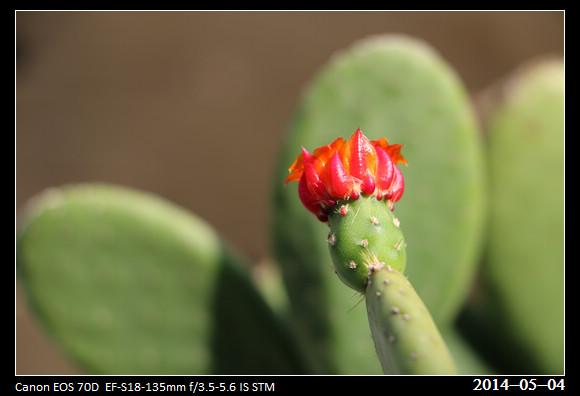20140504_Flowers_2