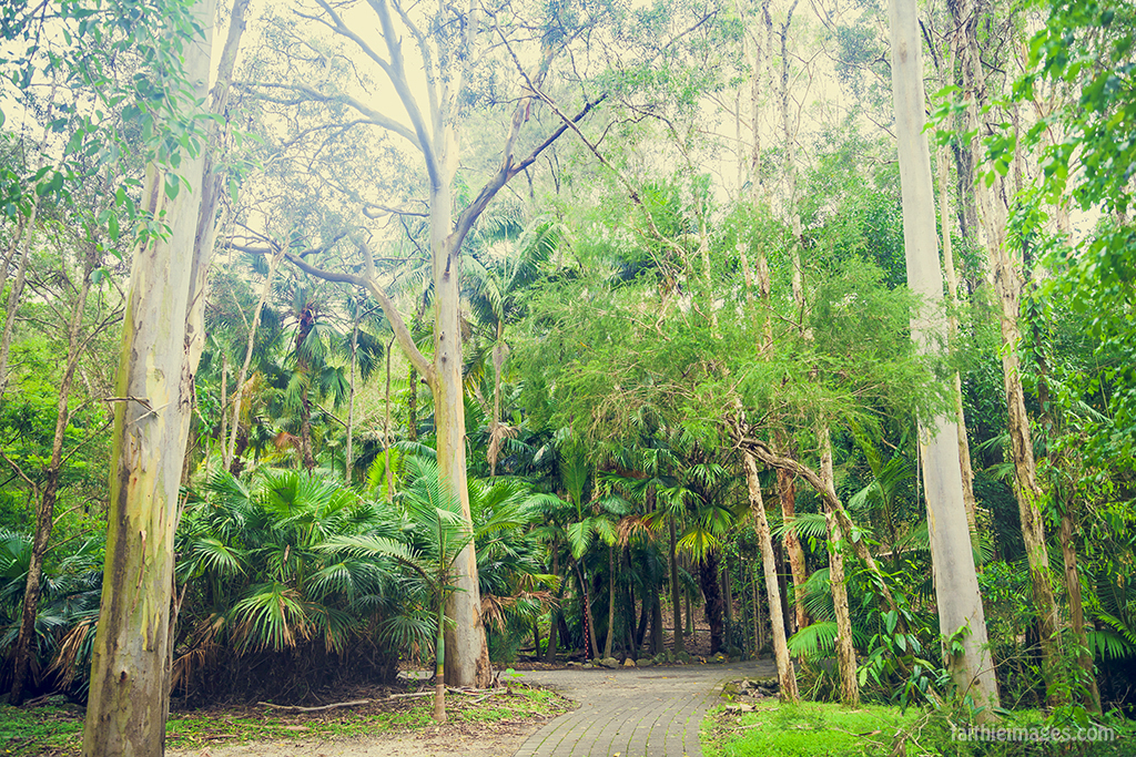 Walking in Currumbin Wildlife Sanctuary