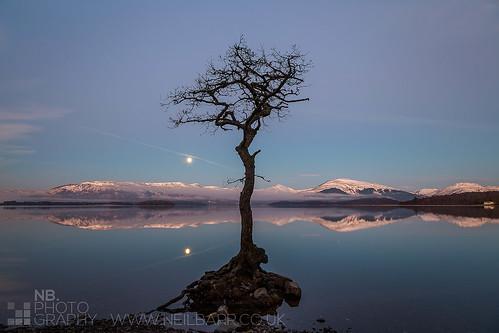 pink moon mist tree water sunrise reflections dawn bay scotland unitedkingdom roots neil loch lomond barr ime luss beinn milarrochy