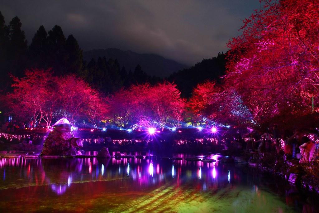 九族櫻花祭 (87)