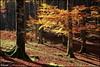 Luces y tonos en el bosque