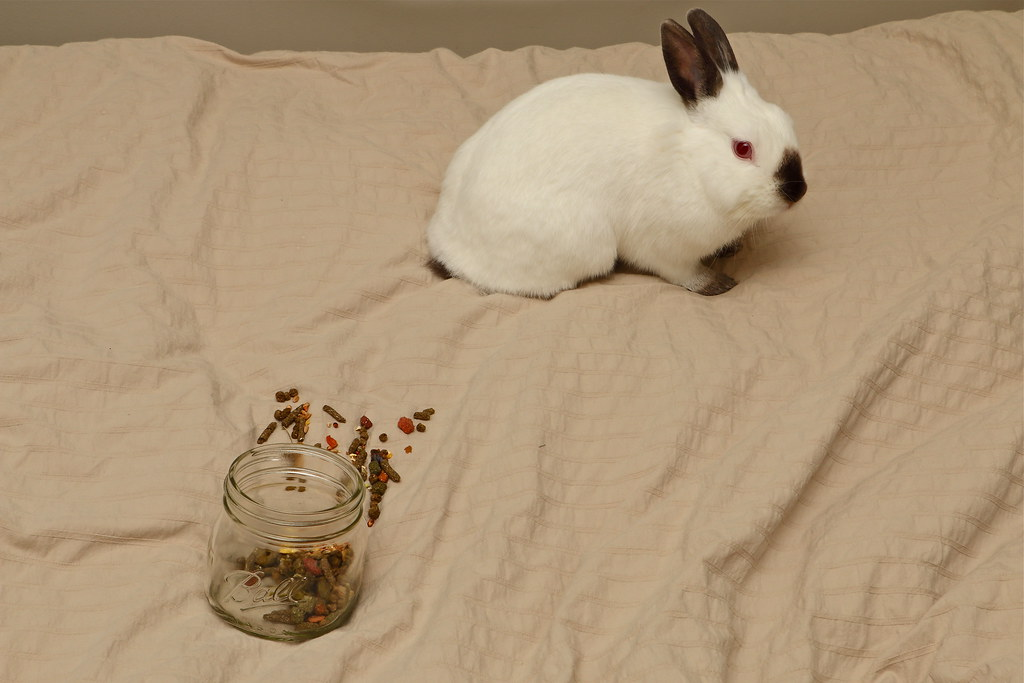 兔兔的生活 ~ 偷吃記事