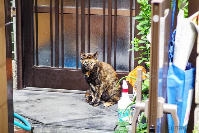 Today's Cat@2016-07-03