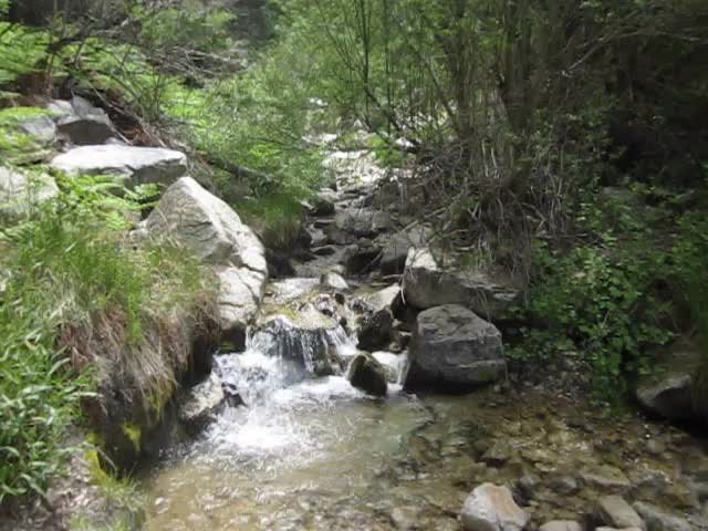469 Video of Falls Creek flowing at Dobbs Camp