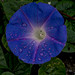 P5190079-Edit by Richard Lemmer