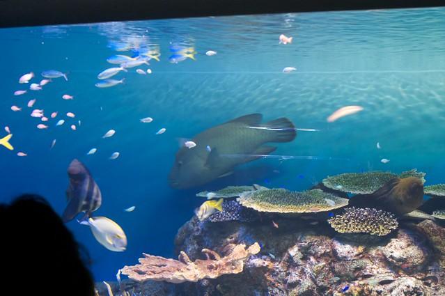 Oga aquarium 5