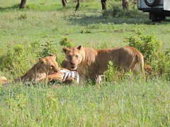8720710421 350299732e m The best vacation and best experience. Thomson Safaris Review: Ed & Karen B.
