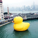 RUBBER DUCK@Hong Kong by ringo01_hk