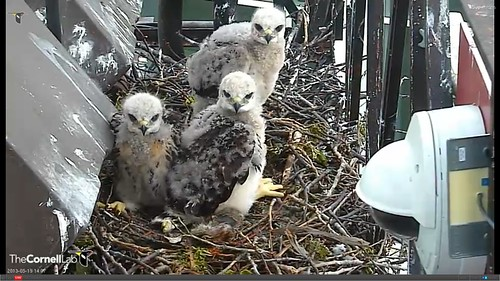 Kids watching Big Red arrive - 19 May 2013 14:07