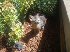 raccoon(0.0), possum(0.0), viverridae(0.0), wildlife(0.0), animal(1.0), marsupial(1.0), mammal(1.0), fauna(1.0), marten(1.0), procyonidae(1.0),