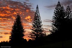 Sunset Behind the Norfolk Island Pines - Looking Toward Quality Row, Kingston, Norfolk Island