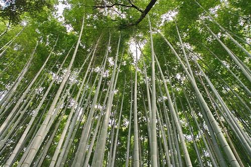 【写真】2013 青葉 : 地蔵院/2021-07-28/IMGP0974