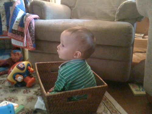 Henry in basket