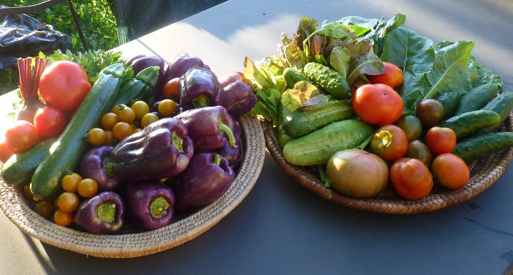 pomodori, peperoni, cetrioli, erbette e zucchine
