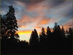 Sunrise through Pines (2), Sisters, OR 9-1-13zzzn
