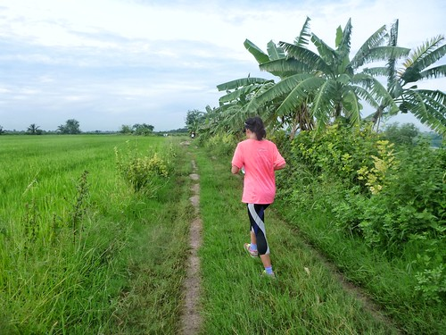 park pink lake green birds festival race this countryside is fishing long rice paddy you bangkok scenic running lap trail will views thai be fields greenery around through runner ultra breathtaking breezy buffaloes nong magnificence chok 2013 3km 7km