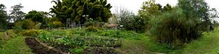 Garden Bed Panorama