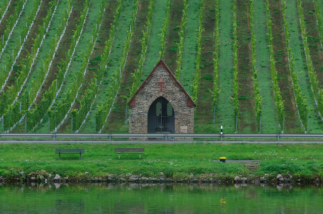 vineyards with a cottage