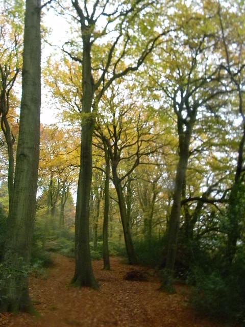Autumn colour 8