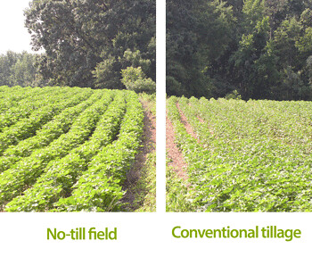 Bartt McCormack uses cover crops and no-till to improve yields on his Tennessee farm.