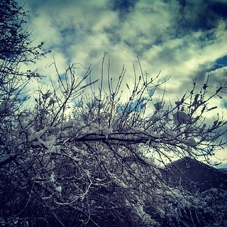 After the storm... #snow #trees #clouds #sky #newengland #newhampshire #winterwonderland #oldmanwinter
