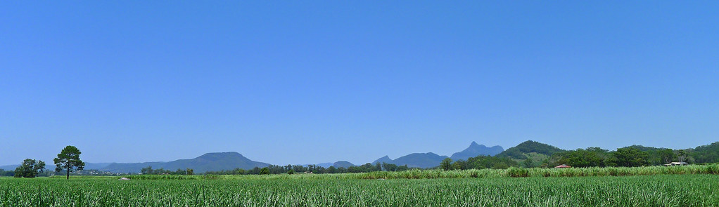 Mt Warning from Tomewin Road