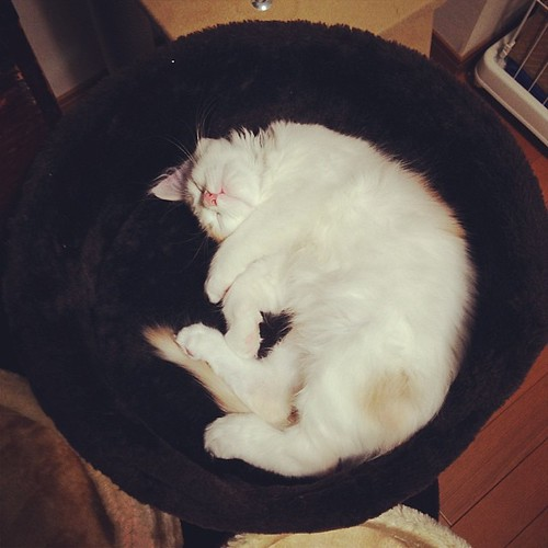 三日月w #cat #あんず
